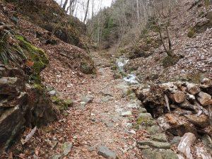 現在の登山道状況です。ブナの路